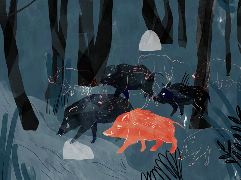 Boars adobephotoshop illustration digital character texture book jungle book forests forest animals jungle forest adventure illustrator illustration