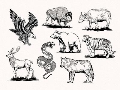 Vintage illustration Animal
