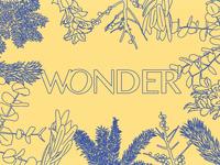 Wonder - Message Series