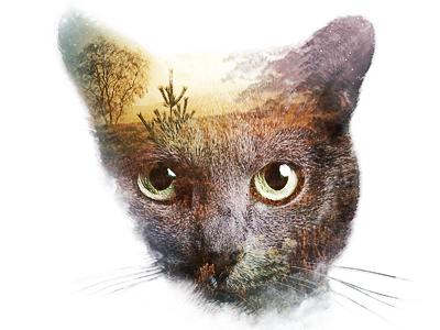 Cat exposure exposure cat