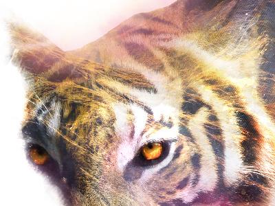 Tiger land double exposure bear land tiger