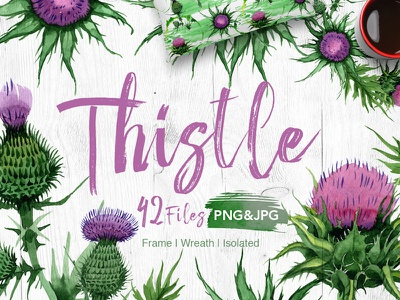 Thistle flowers PNG watercolor set thistle