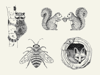 Woodland Creatures Illustrations