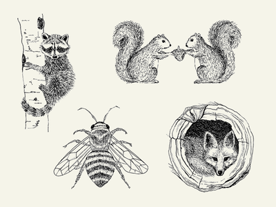 Woodland Creatures Illustrations black and white honey bee pen and ink drawn by hand illustration notecards fox squirrels raccoon pencil