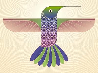 Hummingbird pattern bird animal illustrator vector hummingbird