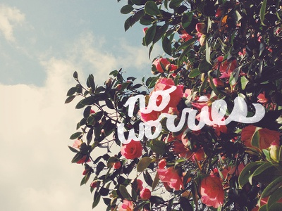 No Worries ink photography roses typography type photo filter