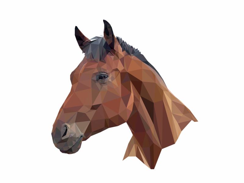 Horse S Head By Pujol Christophe Dribbble Dribbble