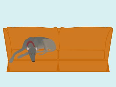Greyhound on couch greyhound