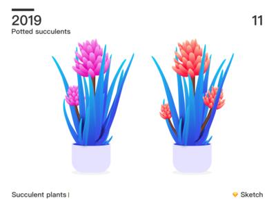 Succulent plants 02