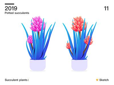 Succulent plants 02 sketch