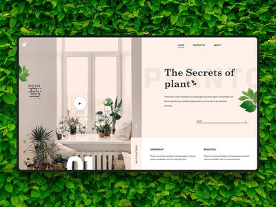 Plant banner tree design branding illustration ecommerce themes minimalistic graphics banner website web