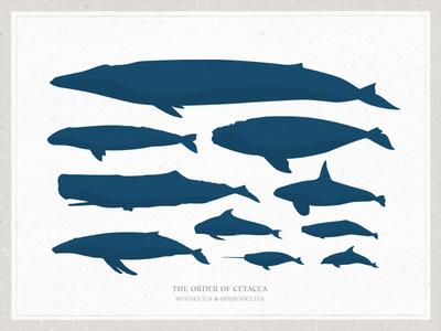 Whale Vectors
