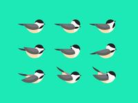 Geometric Chickadee Study