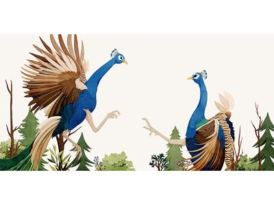 Peacock13