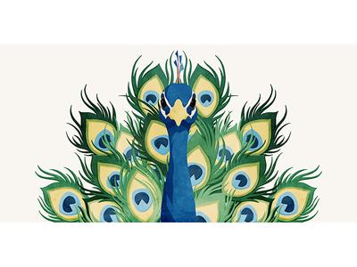 Peacock14