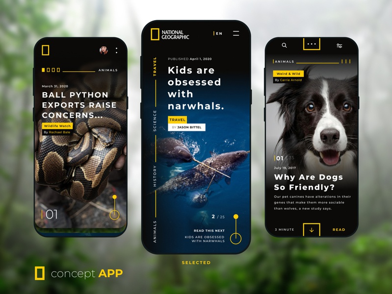 National Geographic  -  Concept App app phone travel science wildlife animal vector concept figma ux ui android ios design app mobile interface uidesign uiux design national geographic