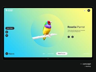 Natural Colors parrot colorful color bird