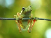 Frog Rendering quak design cgi cature frog green illustration cg cute 3d rendering