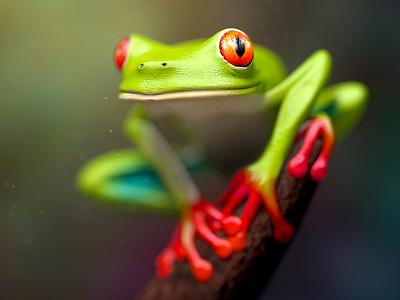 Froggie cute green cgi cg rendering 3d amphibian forrest frog