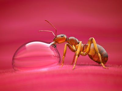 Little Ant colorful animals animal rendering pink nature drinking 3d ant