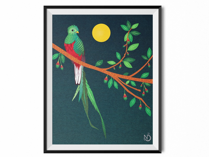 A Resplendent Quetzal on an Aguacatillo Tree photoshop illustrator graphic design digital drawing vectorart vector drawing wildlife art nature art bird illustration quetzal color
