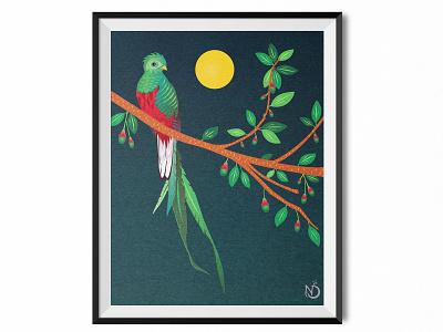 A Resplendent Quetzal on an Aguacatillo Tree photoshop illustrator graphic design digital drawing vectorart vector drawing wildlife art nature art bird illustration quetzal color
