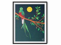 A Resplendent Quetzal on an Aguacatillo Tree