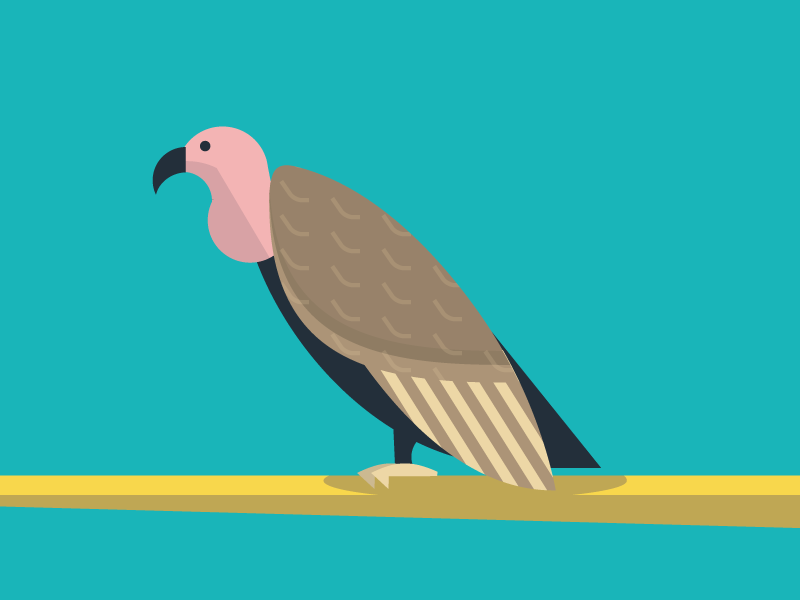 Vulture illustration vulture animals abc flat color simple pattern