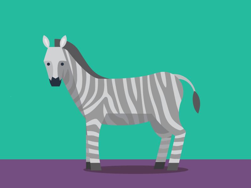 Zebra Illustration2 illustration zebra animals abc flat color simple pattern