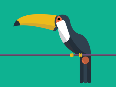 Toucan illustration toucan animals abc flat color simple
