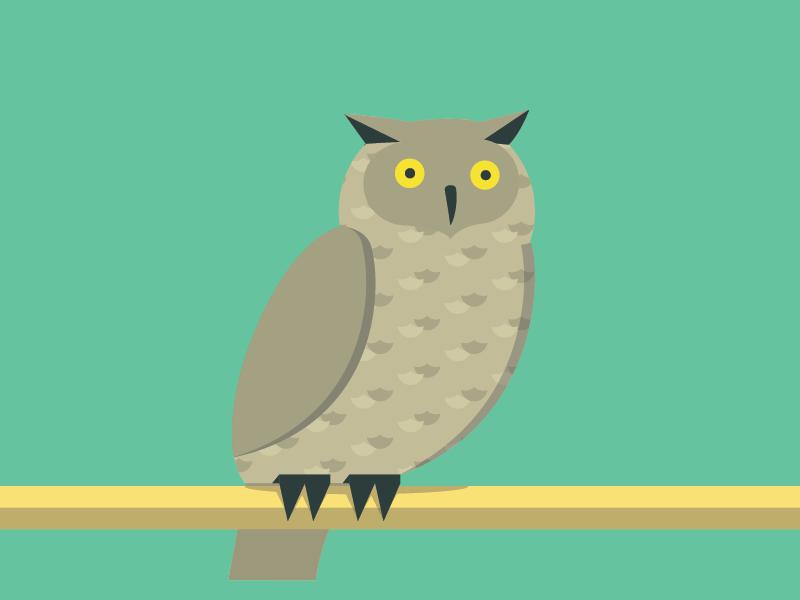 Owlitto illustration owl animals abc flat color simple pattern