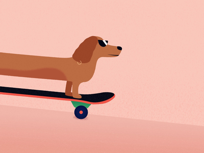 Dachshund Skater longboard yolo ride sunglasses crusing cool puppy dog motion motion design jezovic skater skateboarding skateboard character illustration aftereffects loop animation dachshund