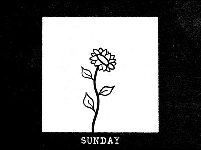 Sunflower motion design jezovic work job illustration mograph sun flower week monday sunday photoshop black and white design sound loop animation motion sunflower