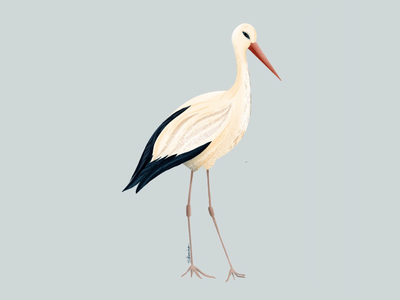 Stork digitalart nature birds animal illustration