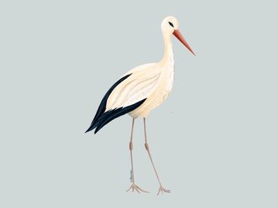 Stork digitalart nature birds animal illustration