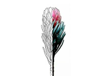 Lineart Protea