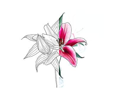 Lineart Flower floral botanic illustration lineart flower vector
