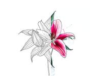 Lineart Flower