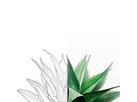 Lineart Leaf