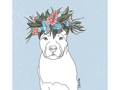 Pitbullflowerpower