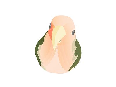 The Bird bird character design illustration