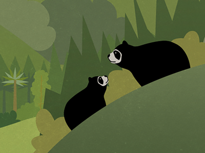 Oso de anteojos design illustration