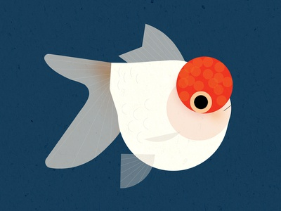 Red Cap Oranda Goldfish animal style flat graphic vector goldfish fish