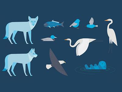Wild Animals character concept background everglades wild animals