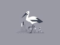 Stork on Grass