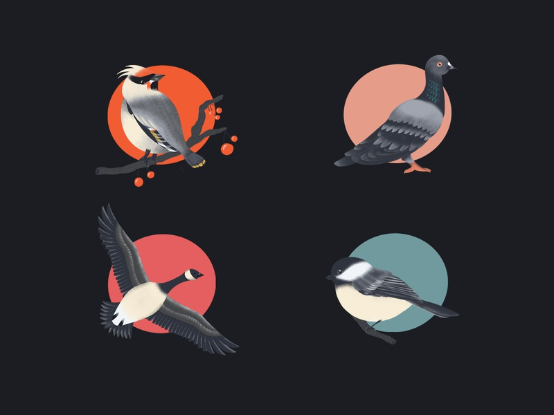 Birds animals birds nature texture graphic design design illustration