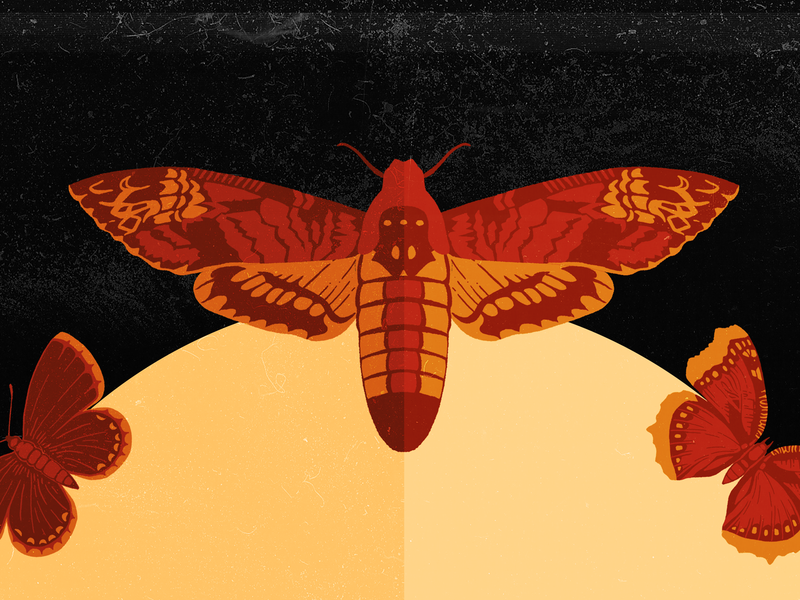 Spooky Moths spooky moth texture design illustration