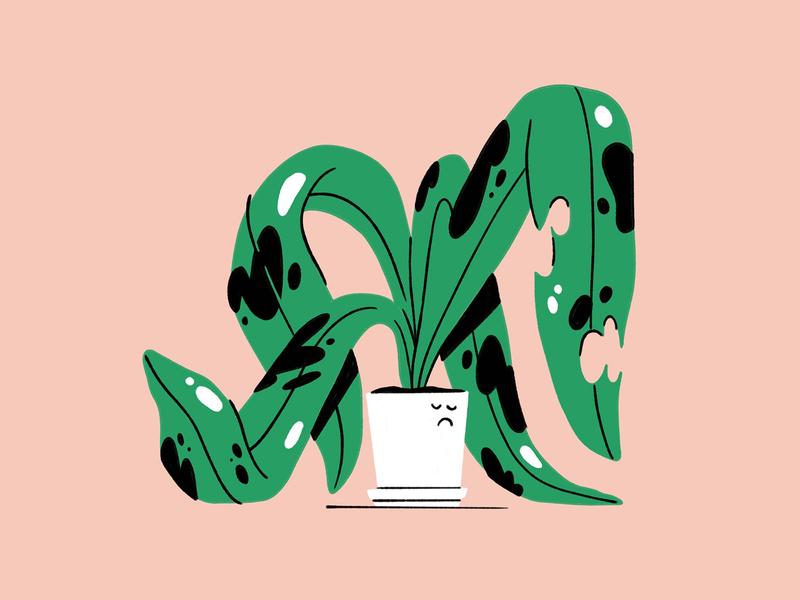 Sad Plant green pink leaf illustration plant