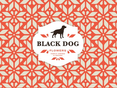Black Dog Pattern Exploration