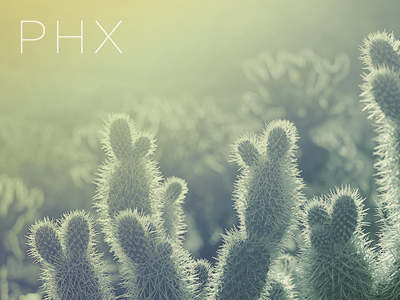PHX cacti cactus az arizona phoenix code airport phx